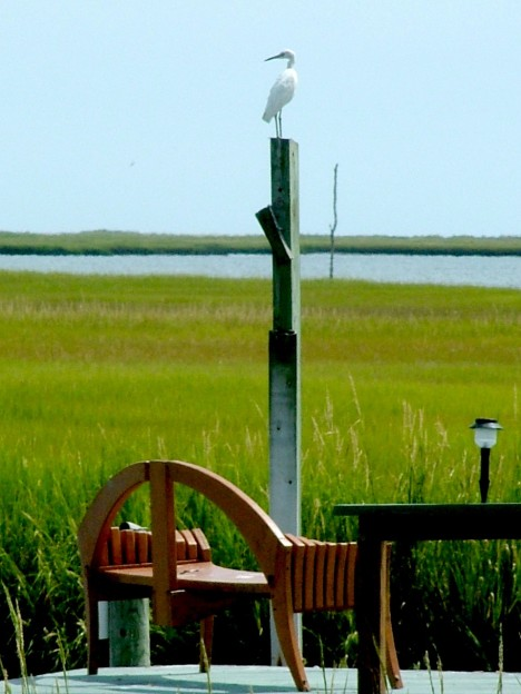 A woodworking project - A bench to watch the marsh