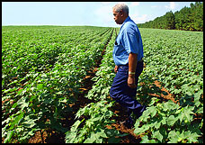 Black farmers win $1.25 billion in discrimination suit