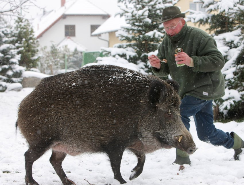 Wild Hogs Deutsch